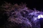 諏訪高島城/夜桜1