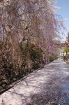 諏訪高島城のお堀