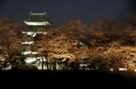 桜越しに松本城