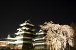 しだれ桜と松本城